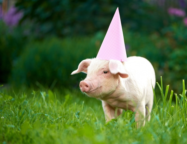 Ritratto di piccolo porcellino rosa sveglio che sta nel giardino fra erba verde.