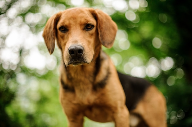 Ritratto di stare cucciolo marrone nella foresta