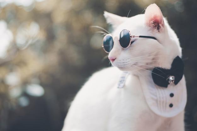 Ritratto di tuxedo white cat indossando occhiali da sole e vestito, concetto di moda animale.