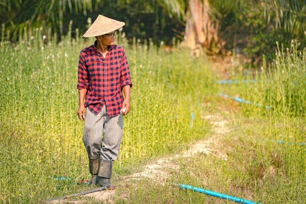 Ritratto di un agricoltore asiatico senior felice al giardino del sesamo.