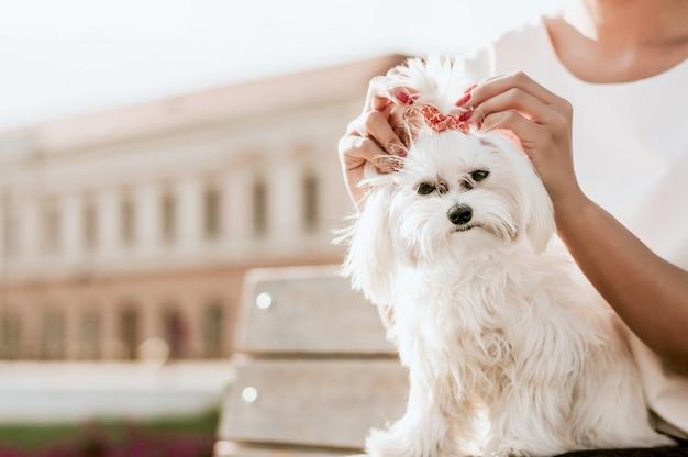 Ritratto di un bel giovane cane maltese