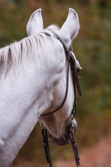 Ritratto di un cavallo bianco su sfondo verde. concetto di sfondo sfocato