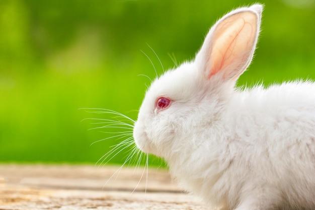 Ritratto di un coniglio bianco divertente su un verde naturale