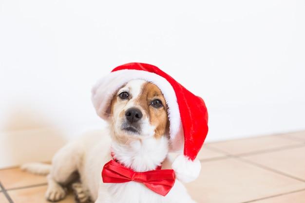 Ritratto di un giovane cane carino che indossa un cappello santa e una cravatta a farfalla rossa. concetto di natale