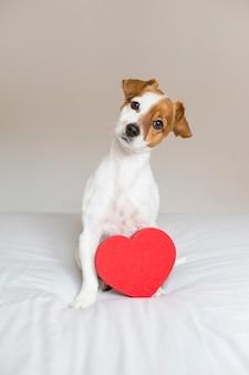 Ritratto di un giovane cane piccolo carino seduto sul letto con un cuore rosso. concetto di san valentino
