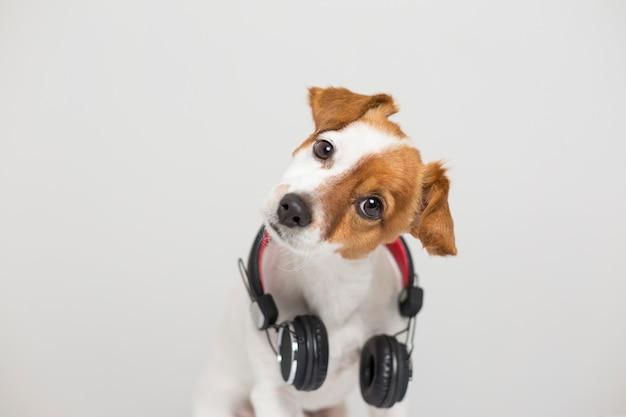 Ritratto di un simpatico cagnolino seduto sul pavimento bianco e utilizzando un auricolare