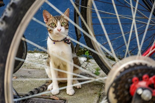 Ritratto di un simpatico gatto seduto vicino a una bicicletta