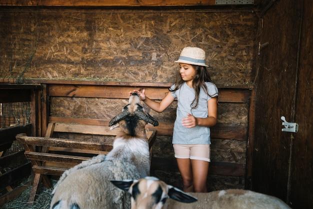 Ritratto di una ragazza che tocca la bocca della pecora nel granaio