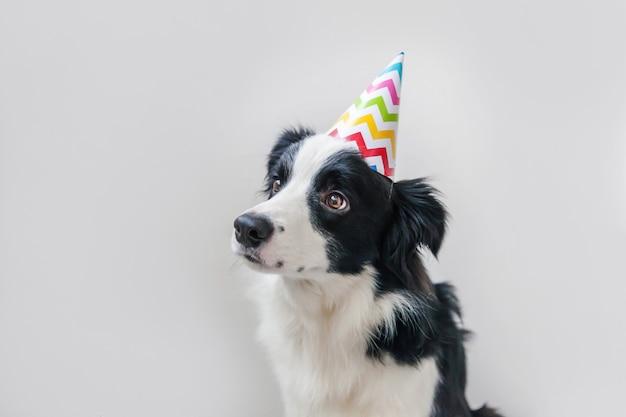 Ritratto divertente del cappello sciocco d'uso di compleanno di smilling sveglio del cucciolo di cane border collie che esamina macchina fotografica isolata su fondo bianco. concetto di festa di buon compleanno animali divertenti animali domestici.
