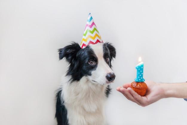 Ritratto divertente del cucciolo sciocco sorridente sveglio di border collie del cucciolo di cane che indossa il cappello sciocco di compleanno che esamina il dolce di festa del bigné con la candela di numero uno isolata sulla parete bianca. concetto di festa di buon compleanno