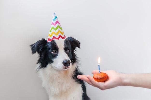 Ritratto divertente del cucciolo sciocco sorridente sveglio di border collie del cucciolo di cane che indossa il cappello sciocco di compleanno che esamina il dolce di festa del bigné con una candela isolata sulla parete bianca. concetto di festa di buon compleanno