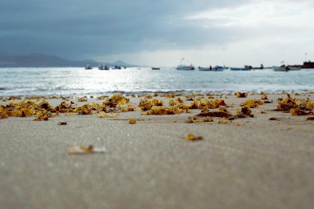 Riva della spiaggia illuminata dalla luce del sole