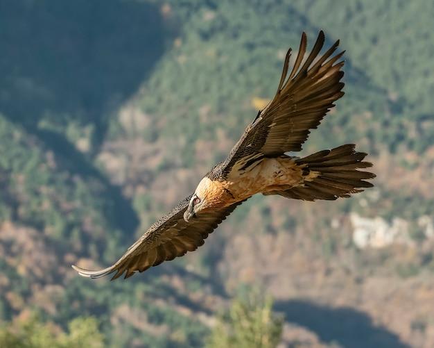 Rompicapo adulto in volo con l'autunno