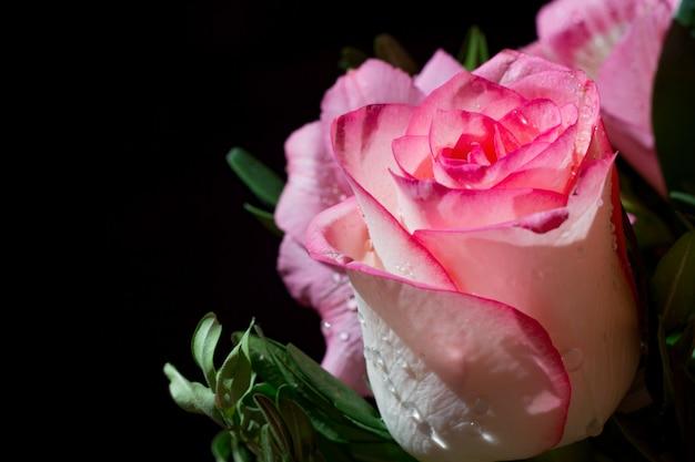 Rosa bianca e rosa con gocce di rugiada. preparazioni funebri. foto da vicino