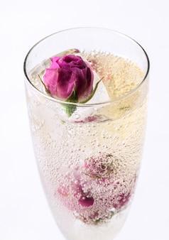 Rosa congelata