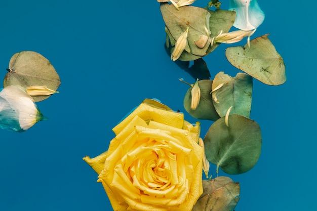 Rosa gialla e foglie piane di disposizione in acqua con lo spazio della copia