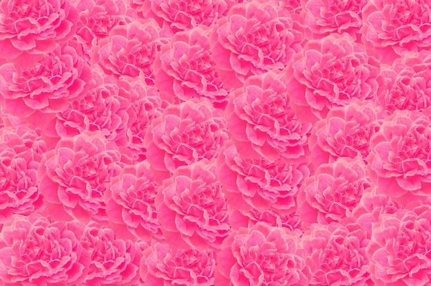 Rosa rosa motivo floreale