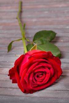 Rosa rossa graziosa del primo piano su una tavola