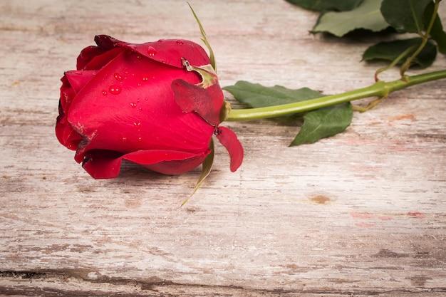 Rosa rossa su fondo in legno