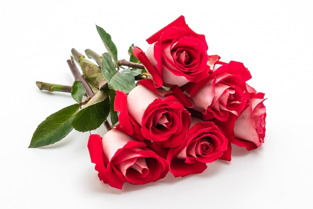 Rosa rossa su sfondo bianco