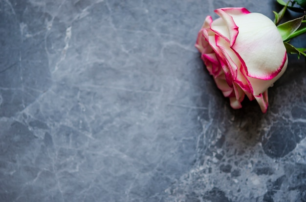 Rosa su sfondo di marmo scuro con posto per il testo. distesi.