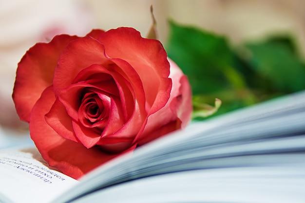 Rose e libro