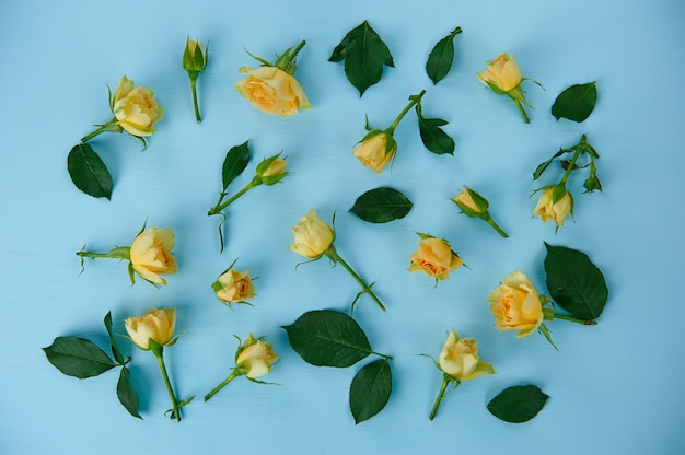 Rose gialle sparse su una superficie blu