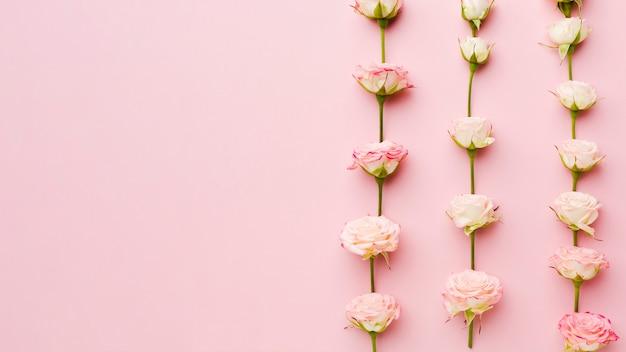 Rose nella vista superiore di file e colonne con spazio di copia
