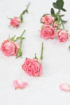 Rose rosa con petali su bianco