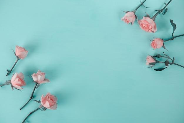 Rose rosa su una superficie blu