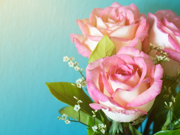 Rose rosa sullo sfondo blu e sole del mattino