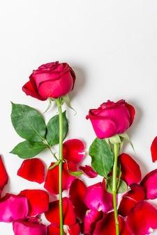 Rose rosse romantiche del primo piano