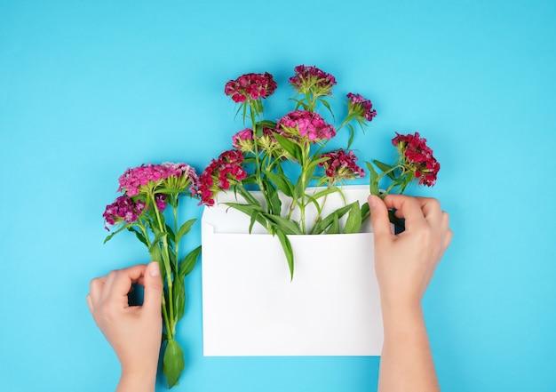Rosso garofano turco dianthus barbatus boccioli di fiori e busta di carta bianca