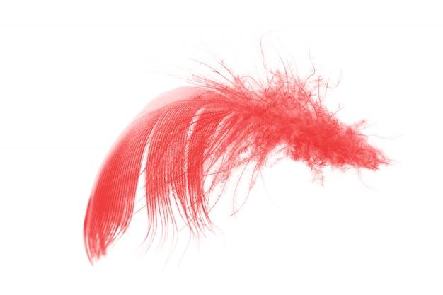 Rosso isolato su sfondo bianco