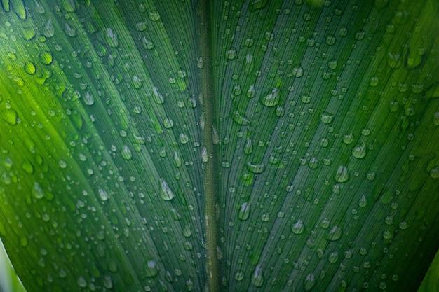 Rugiada e sfondo di foglie verdi
