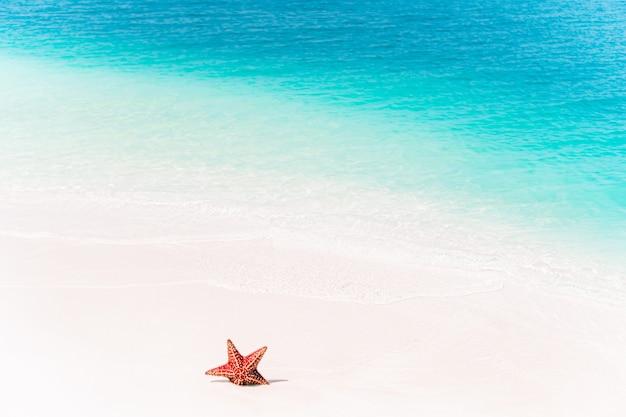 Sabbia bianca tropicale con le stelle marine rosse nel chiaro fondo dell'acqua