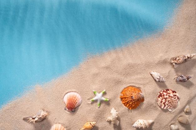 Sabbia di conchiglie di paesaggio marino, cartolina di festa. animali marini.