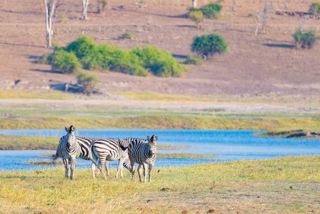 Safari della fauna selvatica nei parchi nazionali africani.