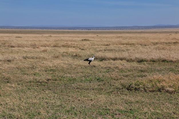 Safari in kenia e tanzania, africa
