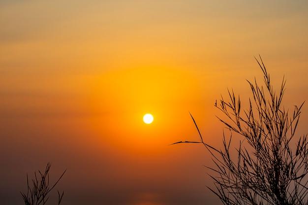 Sagoma nera di un albero sullo sfondo del sole del mattino sul mare.