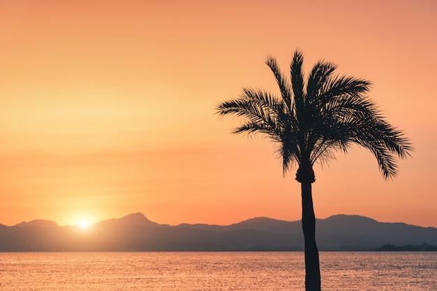Sagome di palme contro il cielo colorato al tramonto