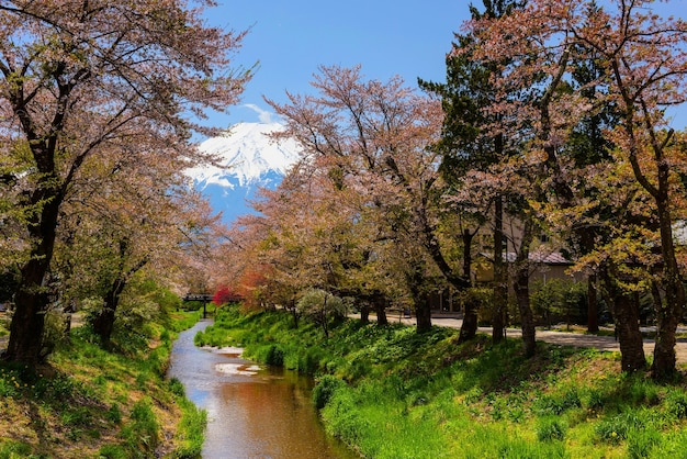 Sakura o fiore di ciliegio intorno al canale nel villaggio di oshino hakkai con il monte. fuji