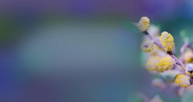 Salice di primavera contro il cielo blu