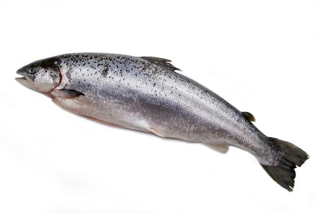 Salmone intero isolato su bianco