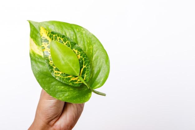 Salvare il concetto di albero, foglie verdi a portata di mano