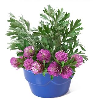 Salvia e trifoglio in un vaso di fiori