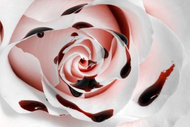 Sangue rosa macro hdr