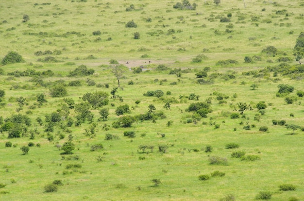 Savana africana paesaggio, sud africa