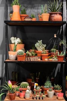 Scaffale con cactus nel negozio succulenta verde in una pentola di terracotta in interni loft in stile scandinavo