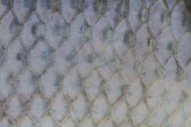Scaglie di pesce d'acqua dolce